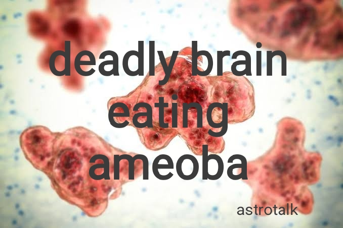 The Destructive Brain-Eating Amoeba