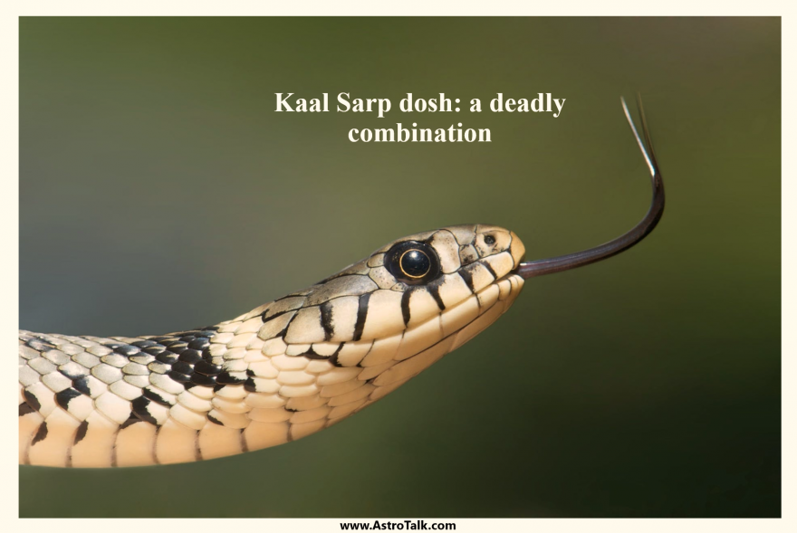 Kaal Sarp dosh: a deadly combination