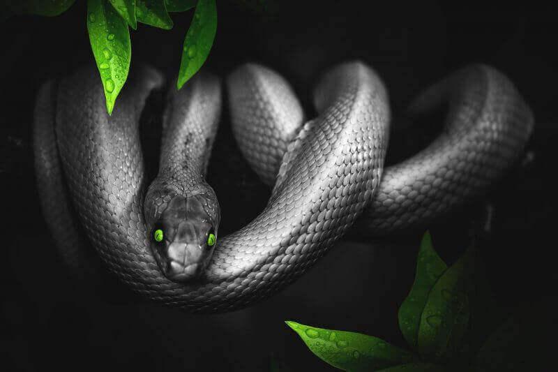 Kaal Sarp dosh: a deadly combination