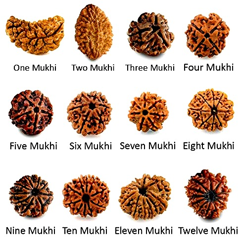 Benefits of all 12 Mukhi rudraksha
