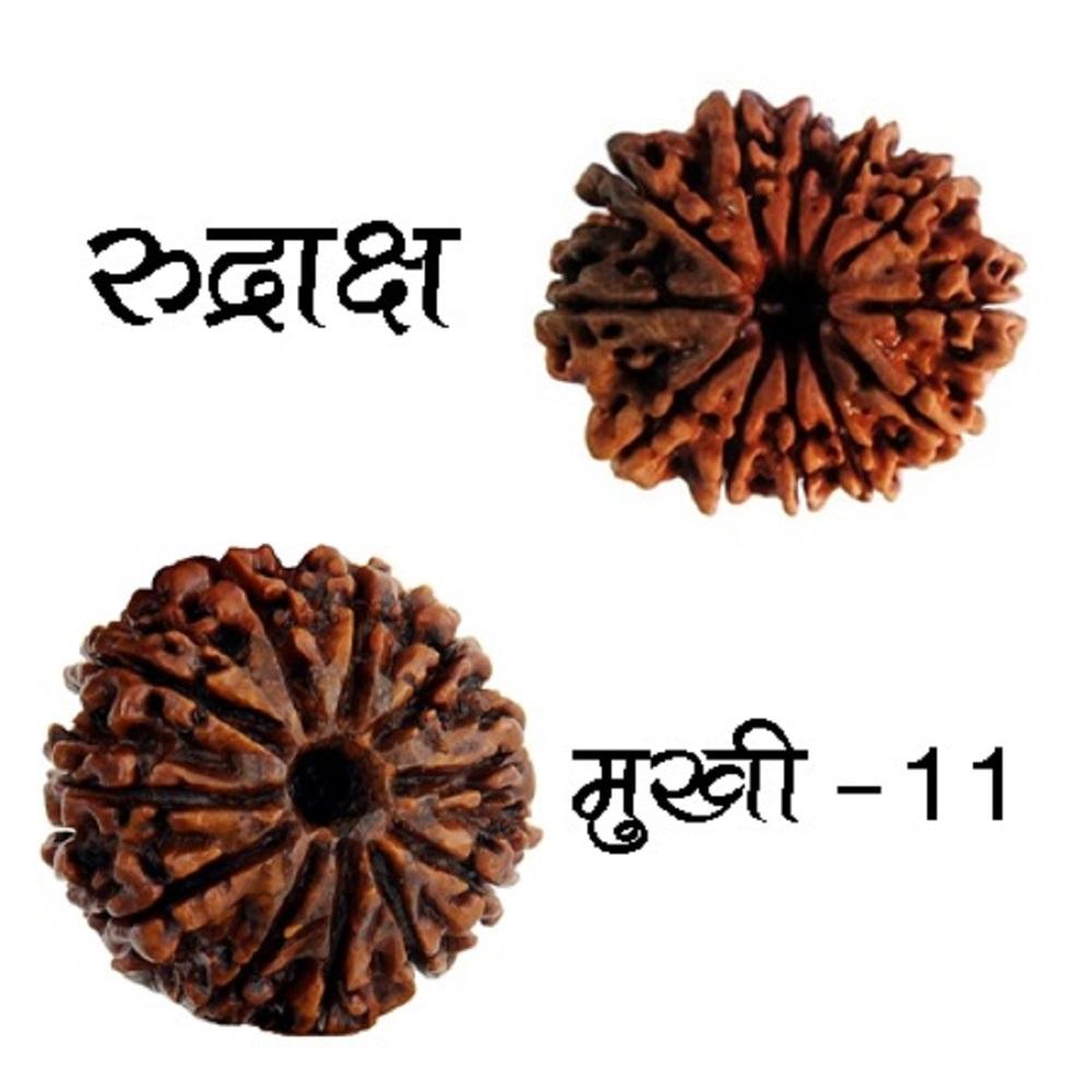 11 Mukhi