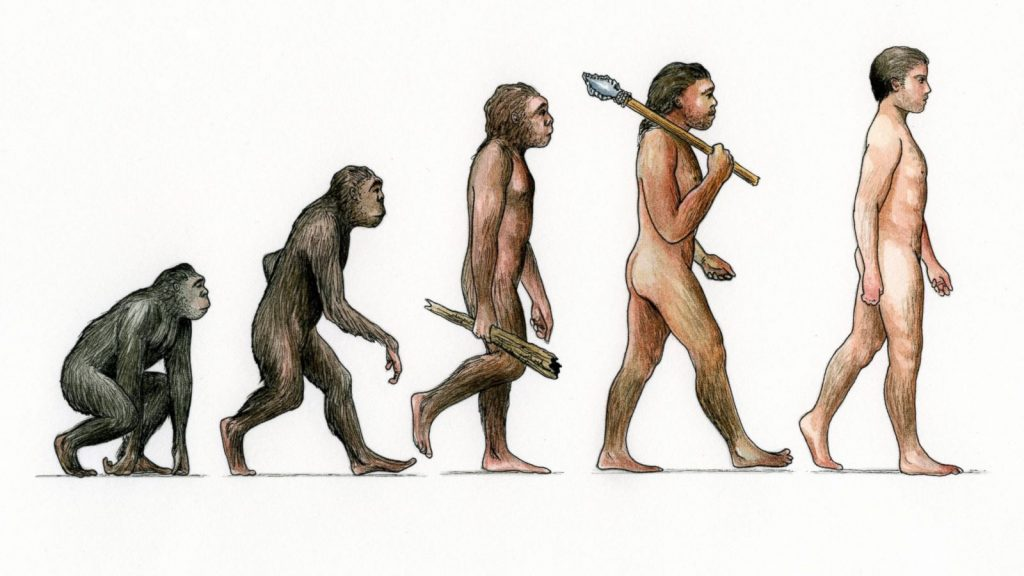 Human evolution stages