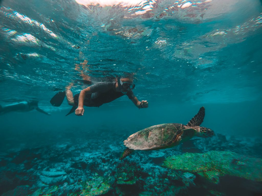 Swim in an Ocean  2020 Bucket List