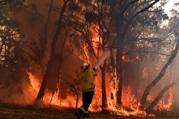 Australia Bushfire: A National Emergency| How Can You Help?