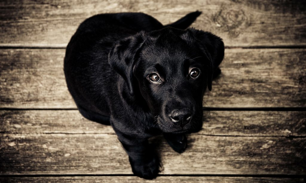 Rahu's effects and remedies  black dog