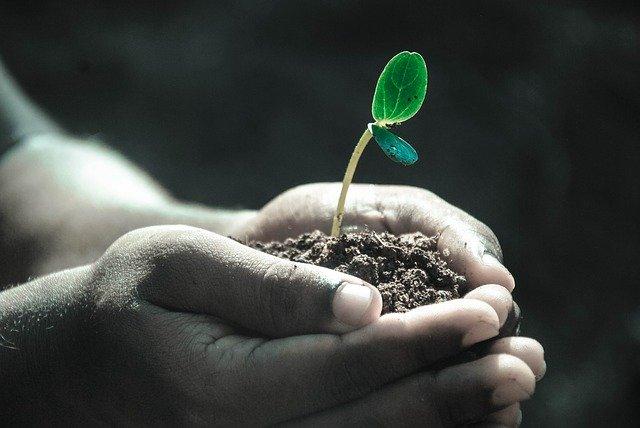 पेड़-पौधे हमारे जीवन में अहम हैं, आईए लाल किताब के अनुसार जानें पेड़ो का महत्व