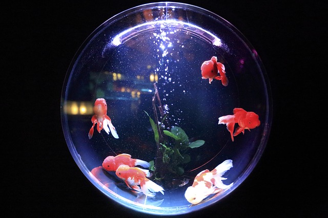 Fish Aquarium in Vastu: Significance and Benefits