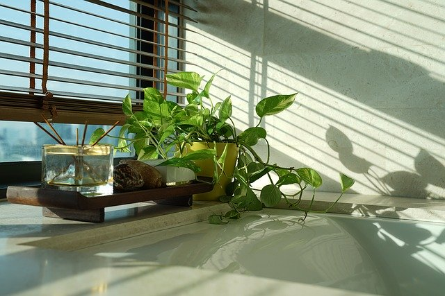 Money Plant: Everything You Need to Know about Vastu tips to maintain it