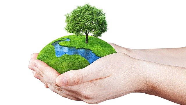 World Environment Day- Relation between Plants and Planets in Astrology