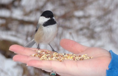 Astrological Significance of feeding birds and animals