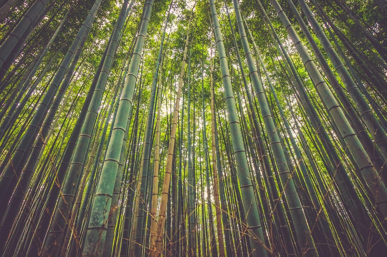 Vastu benefits of Bamboo Plant