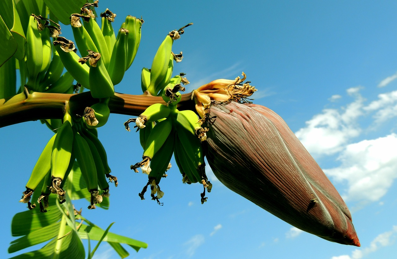 Vastu Shastra for Banana Tree
