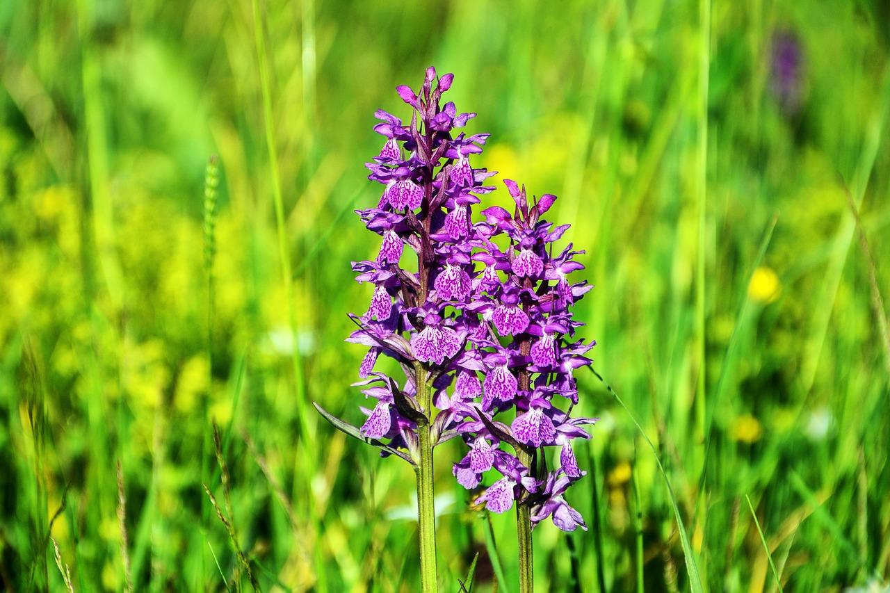 Vastu Shastra for Orchid