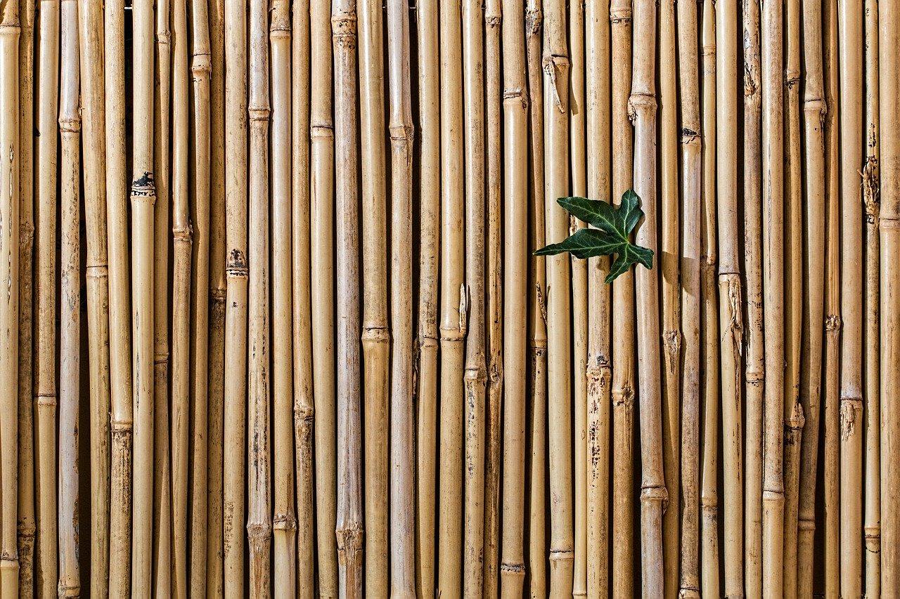 Bamboo Plant Vastu Tips